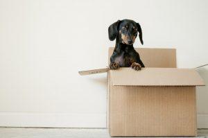 A dog inside a cardboard box.