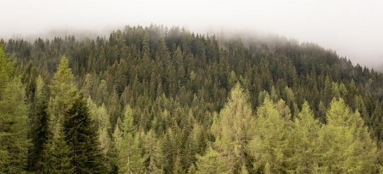 Woods in a fog.