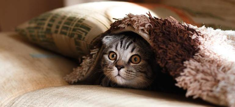 A cat under a blanket.