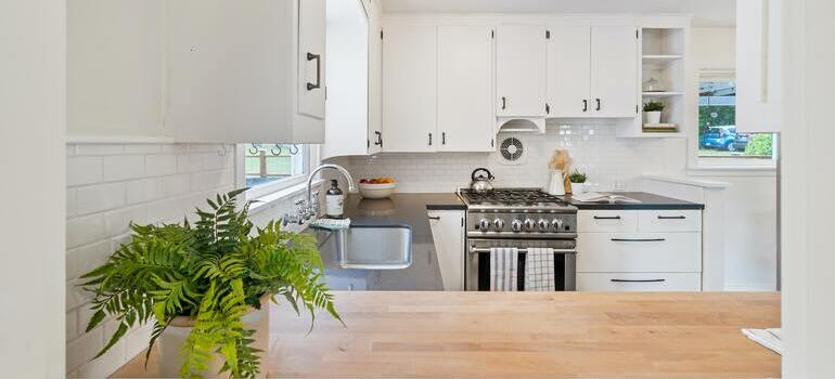 A white kitchen and a green plant on the counter.